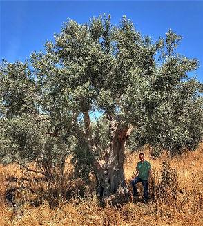 2018 Xafas orchard.jpg
