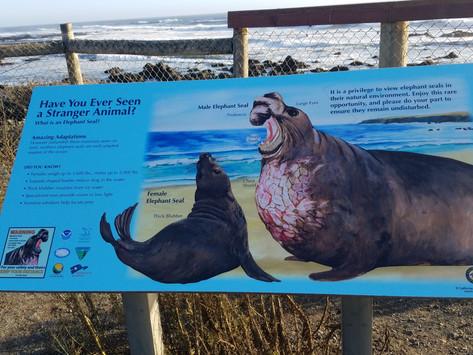 Sand, Sun, and Elephant Seals, Oh my! - San Simeon Beach