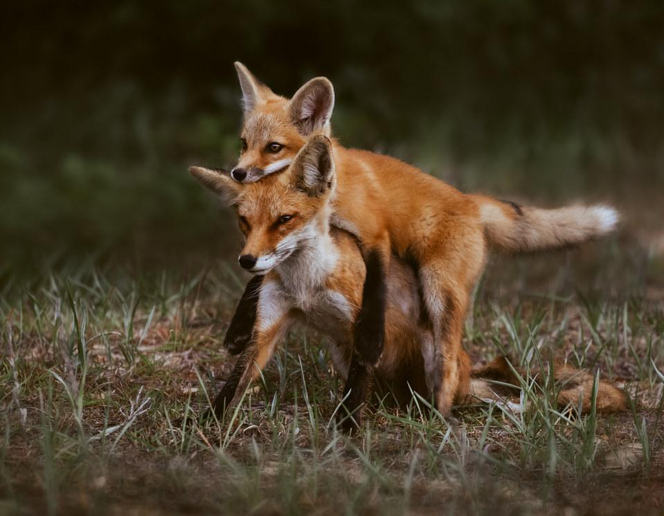 Carry me Mom