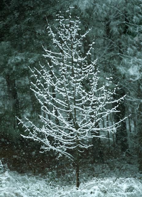 Snow allure