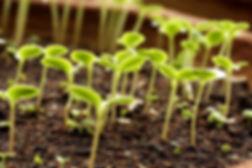 Soil_1.jpeg