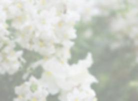 White%20Flowers%20_edited.jpg