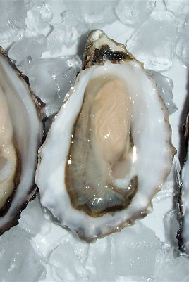 Port Lincoln Oysters