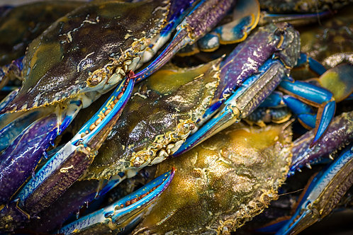 Blue Swimmer Crab Raw