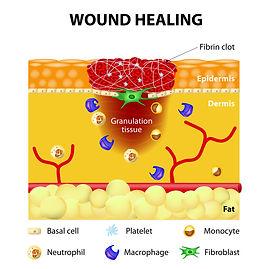 Wound Healing Infographic 02 - Copy.jpg