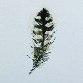 Found feather #1000postcards.jpg