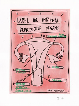 Label the internal reproductive organs 2