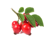fruit-rosehip-header.png