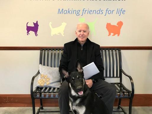 États-Unis : les chiens du nouveau président Joe Biden