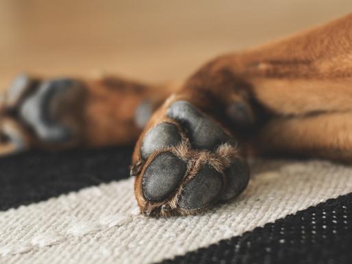 COVID-19 : Désinfecter les pattes de votre chien? Un vétérinaire se prononce