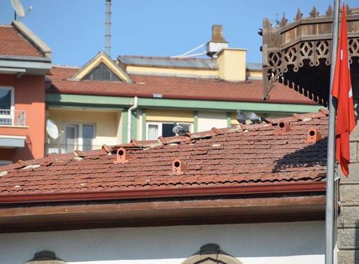 Des «  tuiles-nids » ont été installées pour protéger les oiseaux en Turquie