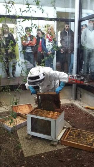 Nos amies les abeilles