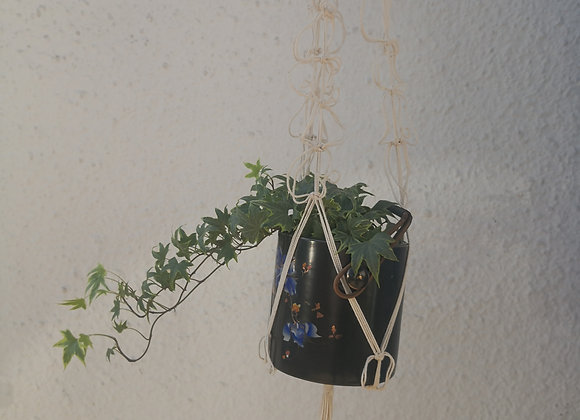 Cotton plant hanger