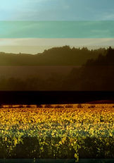 Napa Valley Dream