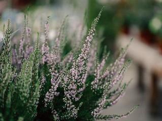 5 plantes pour votre pharmacie