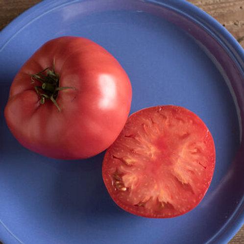 Brandywine Tomato Plant
