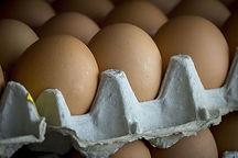 eggs-3761105__480.jpg
