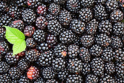 Blackberries (Half-pint), EECO Farm