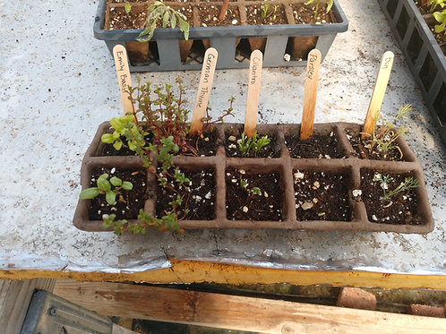 Share The Harvest HERB Garden