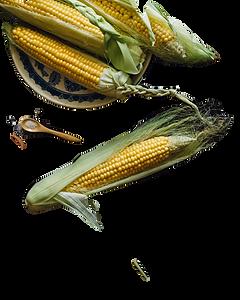 corn-1898198_1920_edited.png