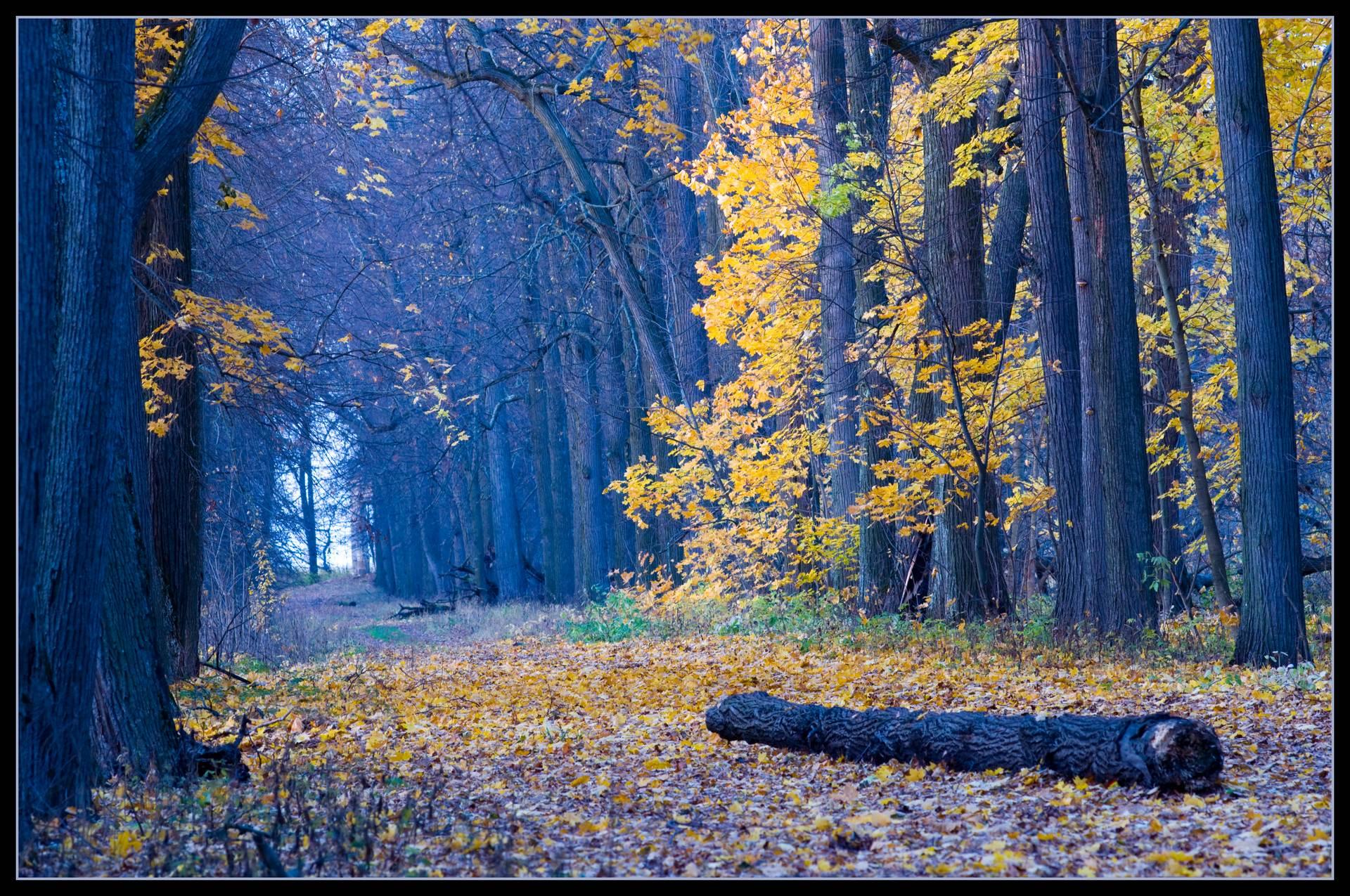 Zakharov_Aleksey_Mysterious wood_B2