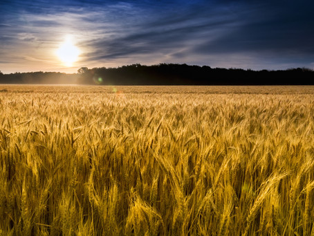 Why Wheat and Gluten-Free?