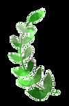 草の冠2.png
