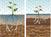 Voedselbossen zijn goed nieuws voor bodem en waterhuishouding