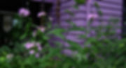 Purple House with Kokopelli.jpg