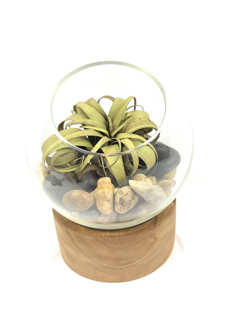 Vase bulle sur pied en bois avec Air Plant - Zenitude