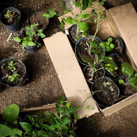 Alimento, agua la responsabilidad frente al cuidado del ambiente