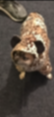 Little dog.PNG