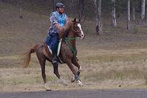 Rhys Norman riding Owata Park Amirah.jpg