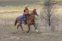 Nicole Horne ridingMount Kosi MM 2019.jp
