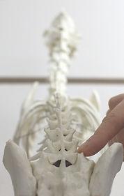 Skelett1.jpg