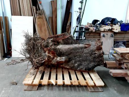 樹根的故事