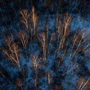 阿龍山人的森林