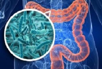 La lotta intestina che apre le porte alle malattie