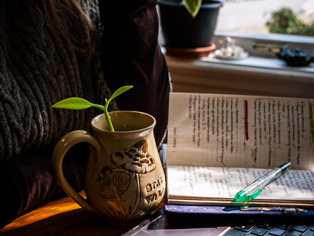 3 Cozy Books to Read This Fall to Deal With Eco Anxiety
