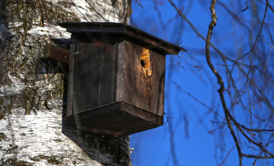 Vogelhäuschen auf dem Grundstück