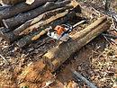 木育プロジェクト