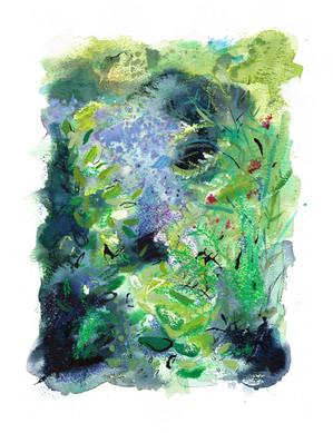 Whinbush Plants