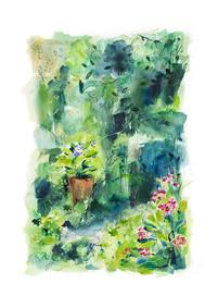Mid Summer Plants
