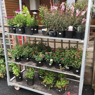 Louis Tea Room plants 2.jpg