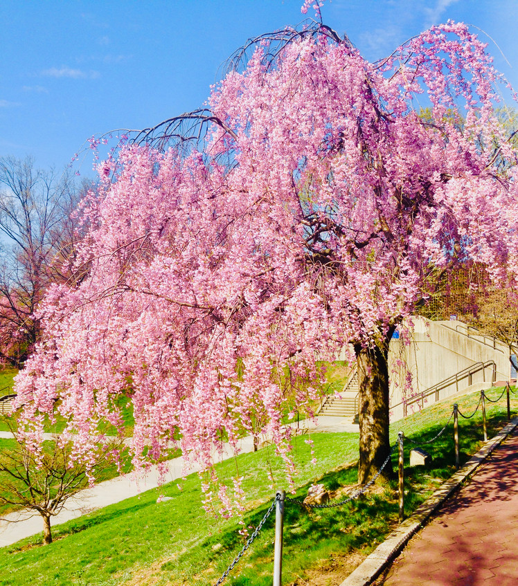 Cherry Tree Fountain