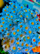 The Best Flowers are Blue