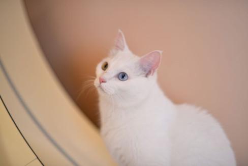 the-Little-Cat_image012.jpg