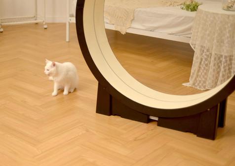 the-Little-Cat_image018.jpg
