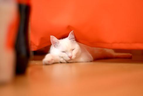 the-Little-Cat_image001.jpg