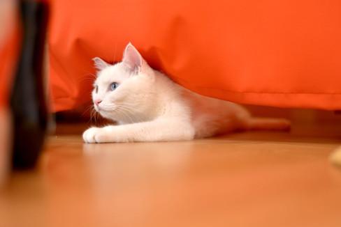 the-Little-Cat_image003.jpg